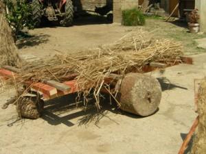 Foto 4. carroccio per trasportare la canapa dai lagni per la stenditura detto straul